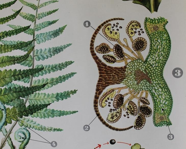 Cartel de Botánica