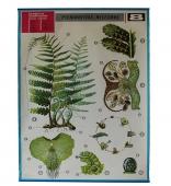 Cartel de Botánica Helechos